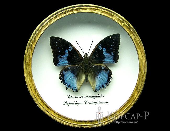 Charaxes smaragdalis. Бабочка Коллекционная.