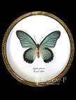 Papilio zalmoxis. Бабочка Коллекционная.